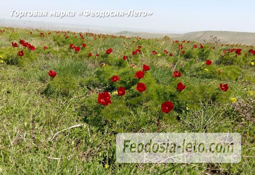 Феодосия Коктебель. Природный парк Гора Клеменьева - фотография № 11