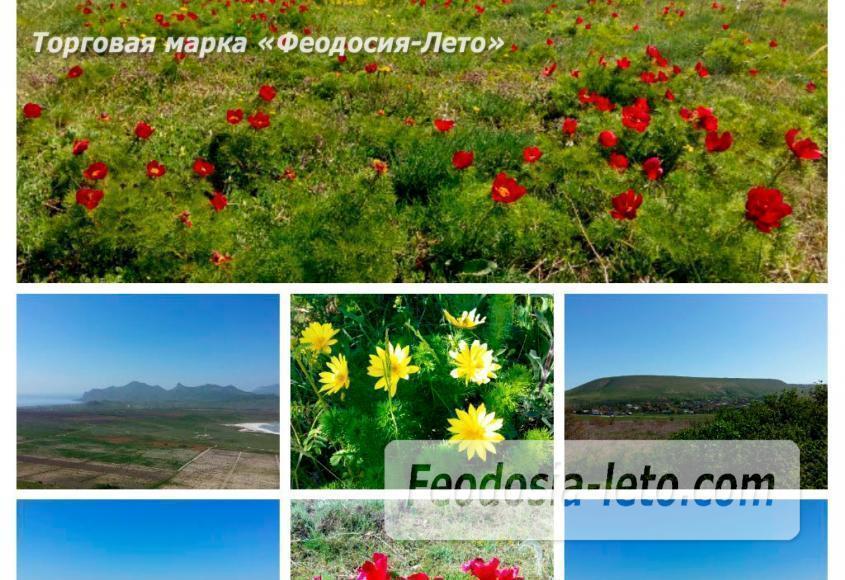 Крым Коктебель. Природный парк Гора Клеменьева - фотография № 13