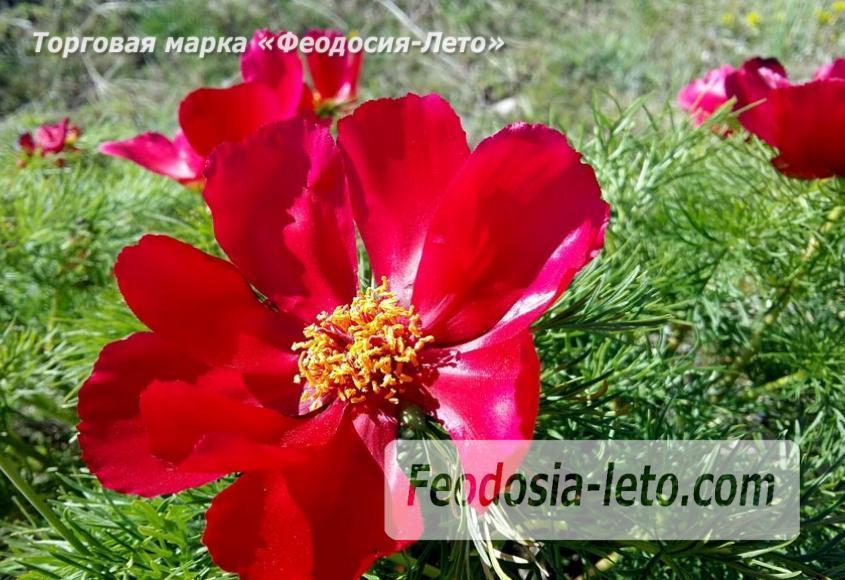 Крым Феодосия Коктебель. Природный парк Гора Клеменьева - фотография № 1