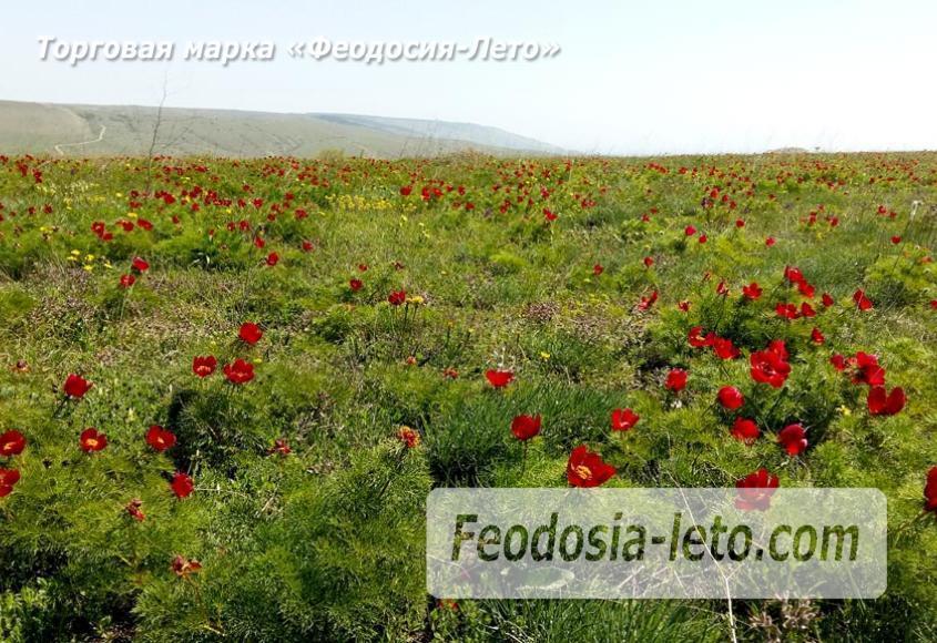 Феодосия Коктебель. Природный парк Гора Клеменьева - фотография № 8