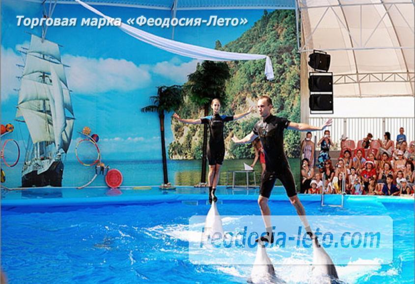 Крым Феодосия Дельфинарий Немо - фотография № 3