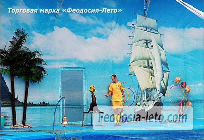 Крым Феодосия Дельфинарий Немо - фотография № 5