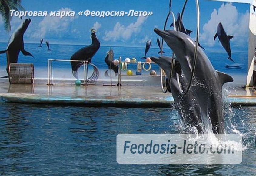 Крым Феодосия Дельфинарий Немо - фотография № 6