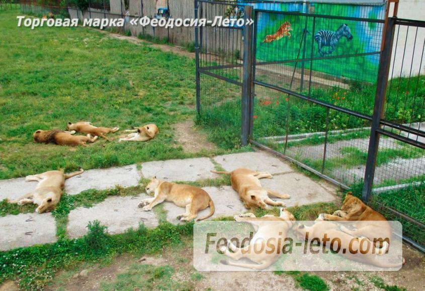 Крым Белогорск парк львов Тайган - фотография № 13