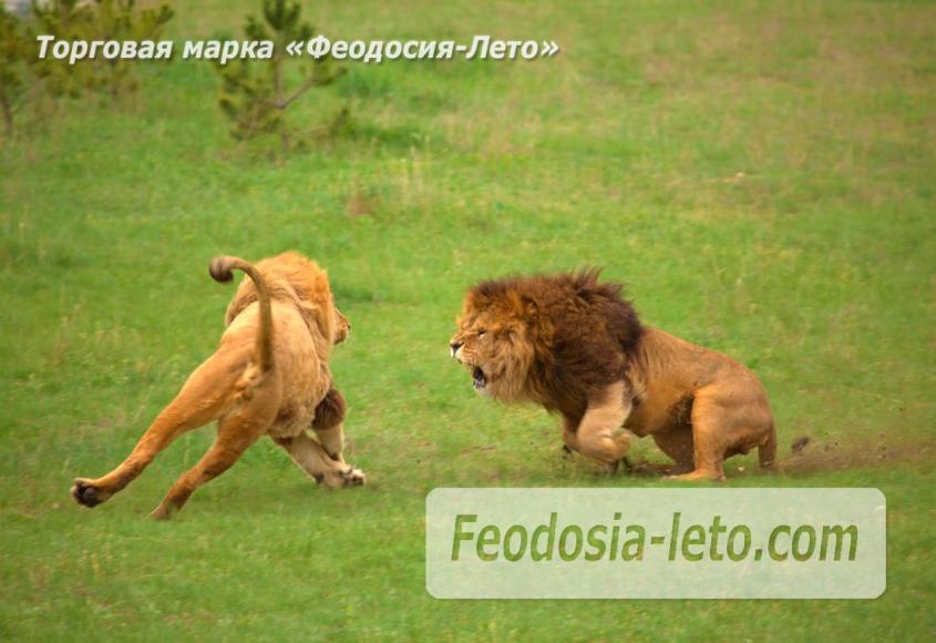 Крым Белогорск парк львов Тайган - фотография № 18