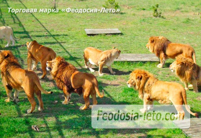 Крым Белогорск парк львов Тайган - фотография № 2