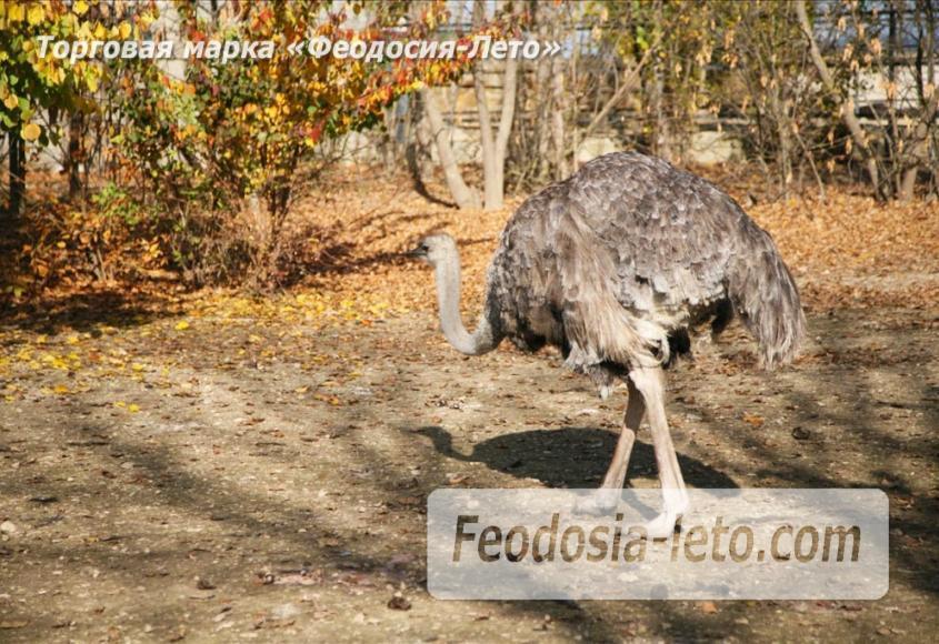Крым Белогорск парк львов Тайган - фотография № 20
