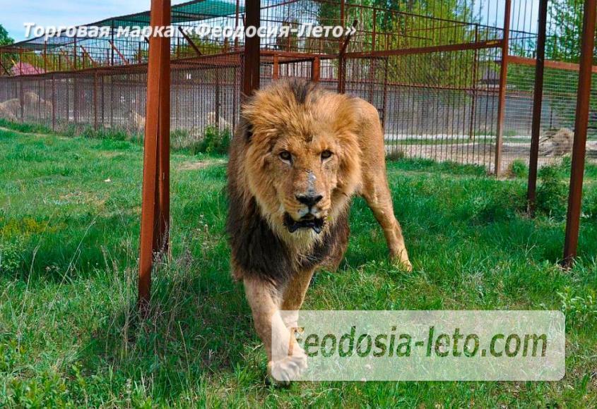 Крым Белогорск парк львов Тайган - фотография № 25