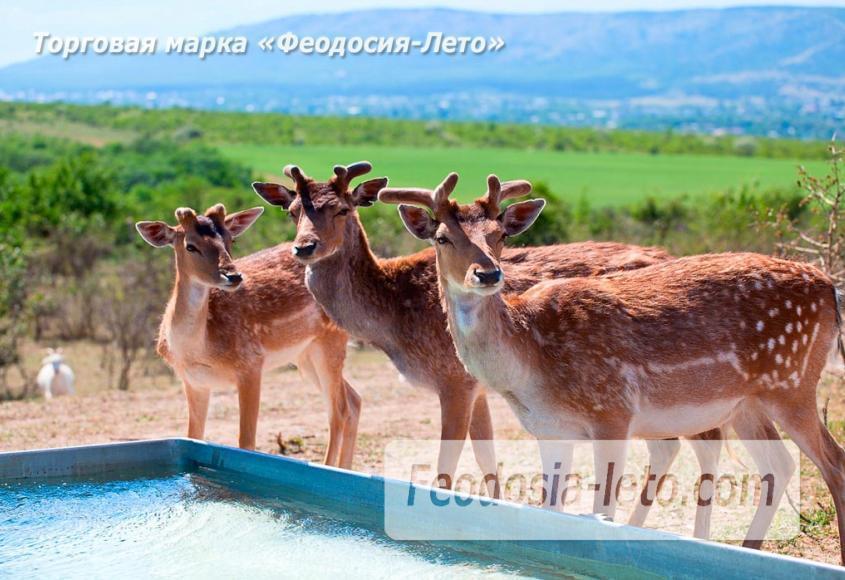 Крым Белогорск парк львов Тайган - фотография № 26