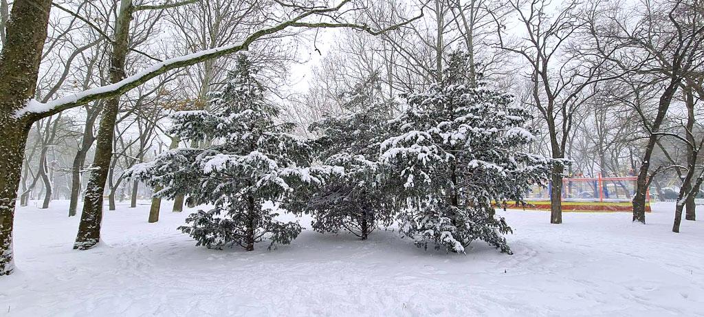 Ёлки в снегу