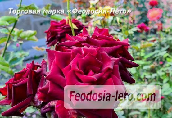 Дом для отдыха в Феодосии, улица Насыпная - фотография № 8