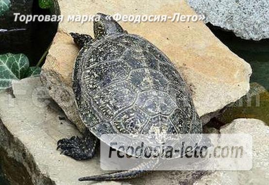 3 номера в частном секторе в Феодосии на улице Пономарёвой - фотография № 4