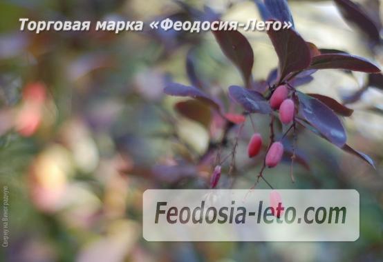 4 комнатный коттедж в Феодосии на улице Виноградная - фотография № 10