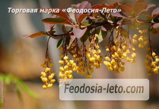 4 комнатный коттедж в Феодосии на улице Виноградная - фотография № 11