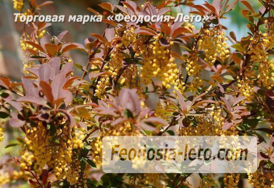 4 комнатный коттедж в Феодосии на улице Виноградная - фотография № 4