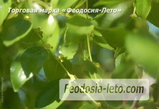 4 комнатный коттедж в Феодосии на улице Виноградная - фотография № 5