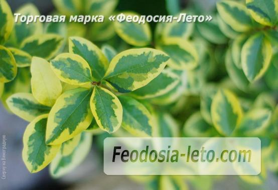4 комнатный коттедж в Феодосии на улице Виноградная - фотография № 6