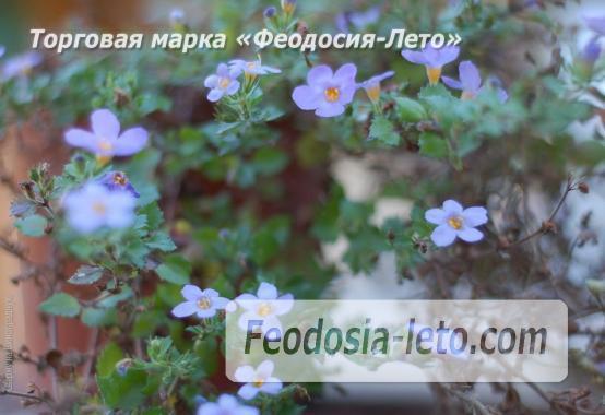 4 комнатный коттедж в Феодосии на улице Виноградная - фотография № 17