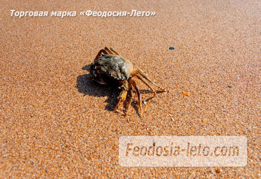 Дикий пляж на Песчаной балке п. Приморский у Феодосии - фотография № 16