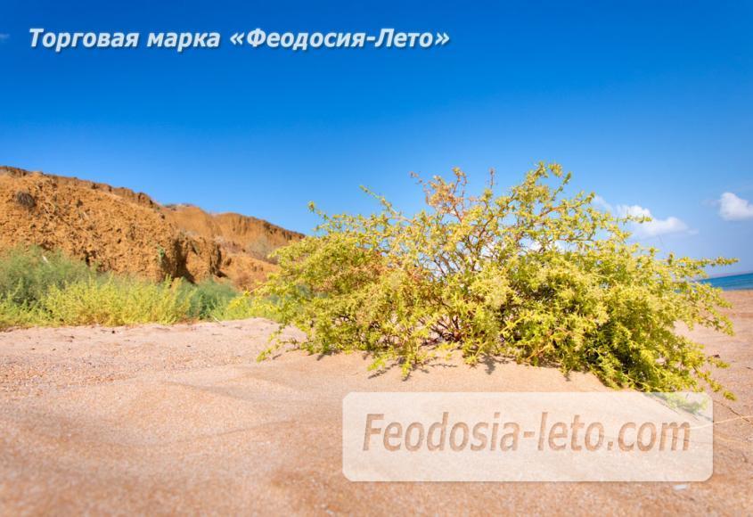 Дикий пляж на Песчаной балке п. Приморский у Феодосии - фотография № 17