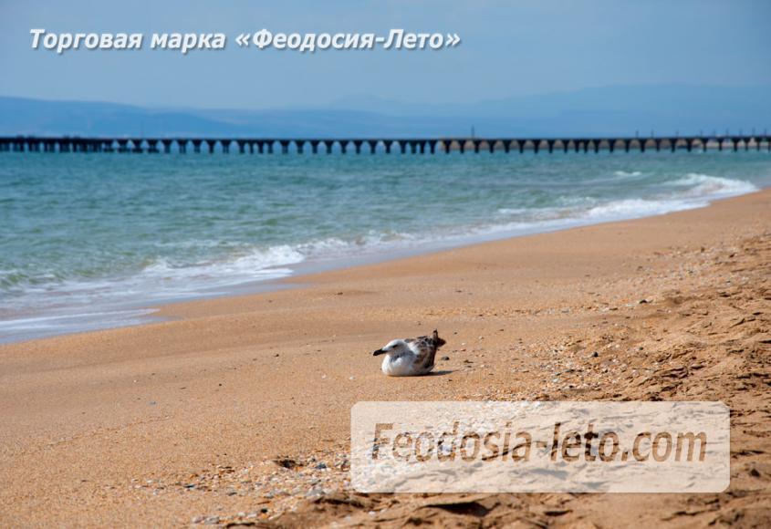 Дикий пляж на Песчаной балке п. Приморский у Феодосии - фотография № 3