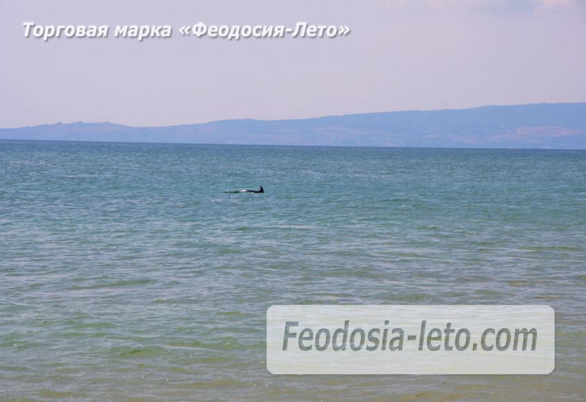 Дикий пляж на Песчаной балке п. Приморский у Феодосии - фотография № 5