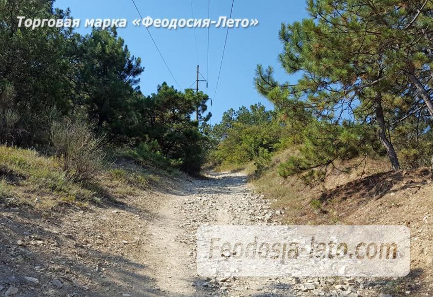 Экскурсии в Феодосии. Лес и Лысая гора - фотография № 9