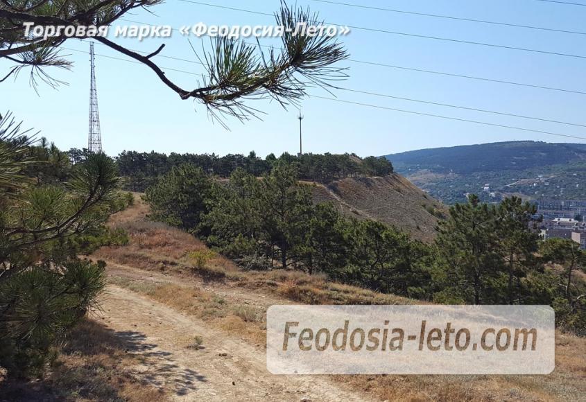 Экскурсии в Феодосии. Лес и Лысая гора - фотография № 12
