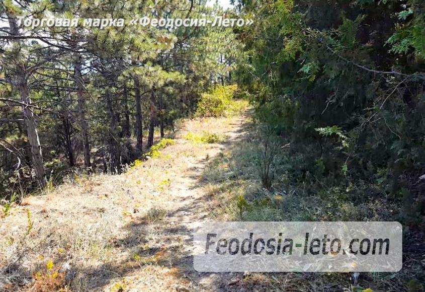 Экскурсии в Феодосии. Лес и Лысая гора - фотография № 14