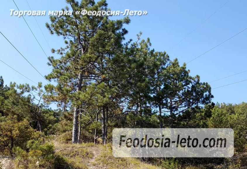Экскурсии в Феодосии. Лес и Лысая гора - фотография № 15