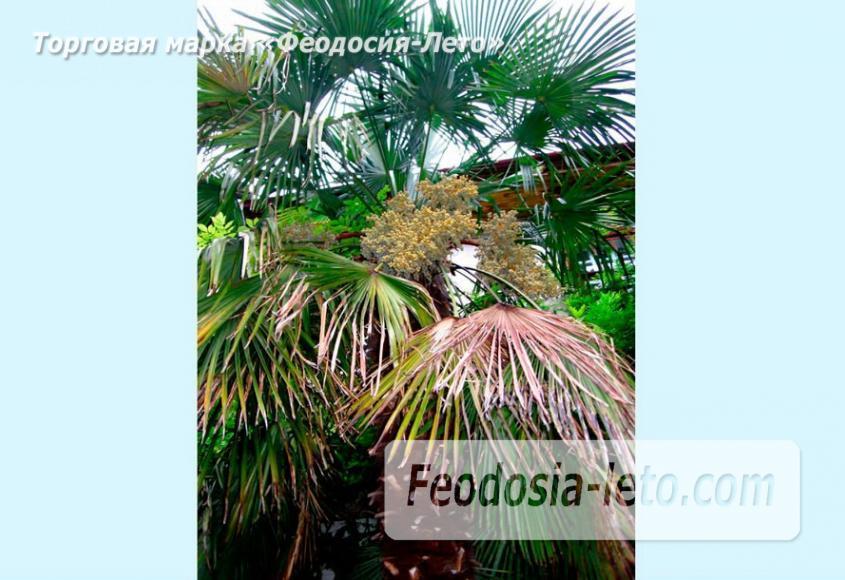Никитский ботанический сад - фотография № 21