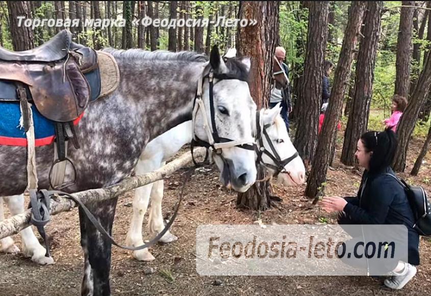 Конные прогулки в Феодосии - фотография № 4