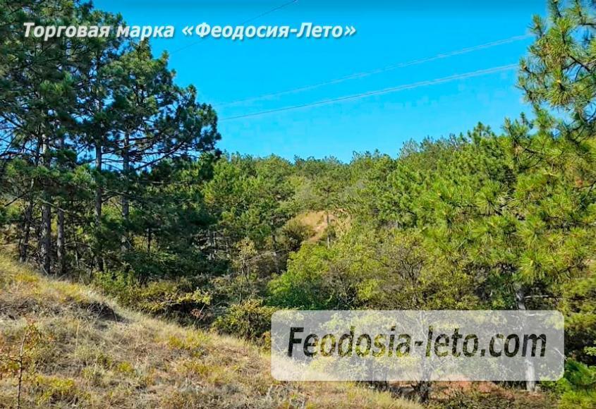 Экскурсии в Феодосии. Лес и Лысая гора - фотография № 1