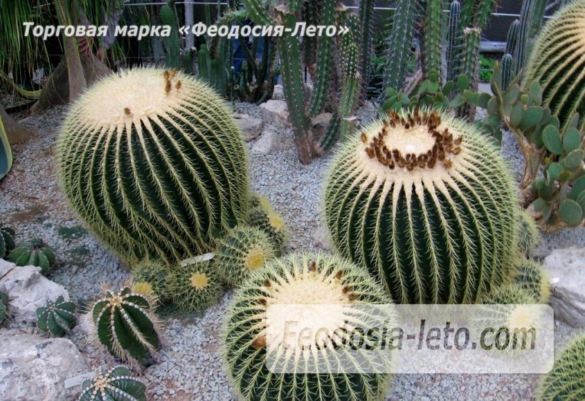 Никитский ботанический сад - фотография № 3