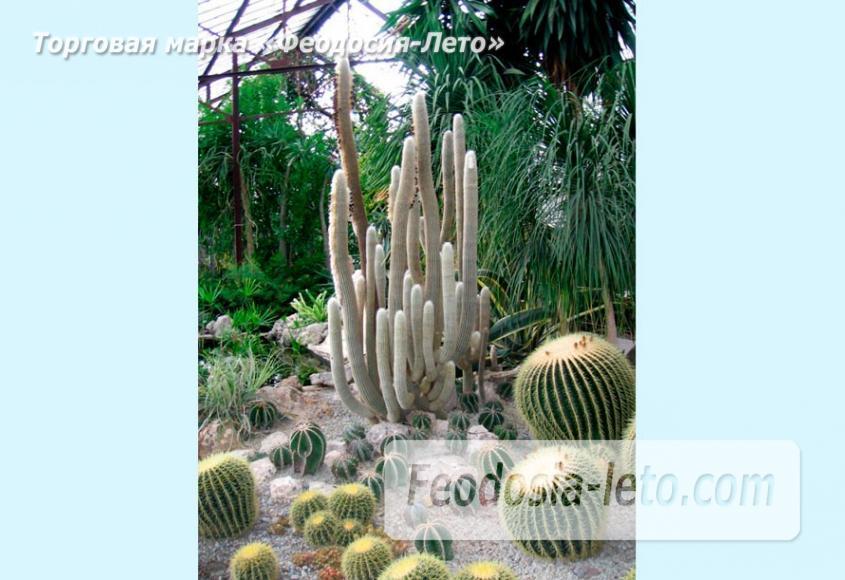 Никитский ботанический сад - фотография № 22