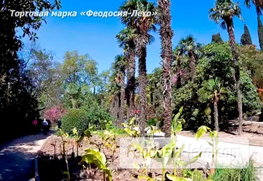 Никитский ботанический сад - фотография № 10