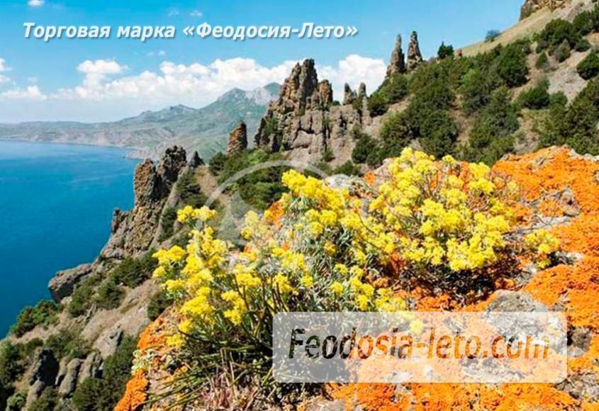 Карадагский заповедник в Крыму - фотография № 4