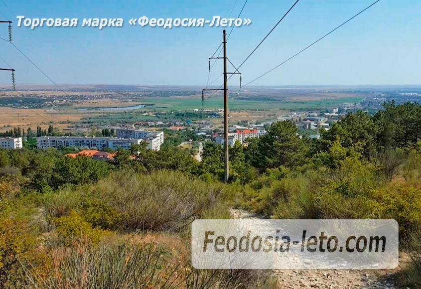 Экскурсии в Феодосии. Лес и Лысая гора - фотография № 2