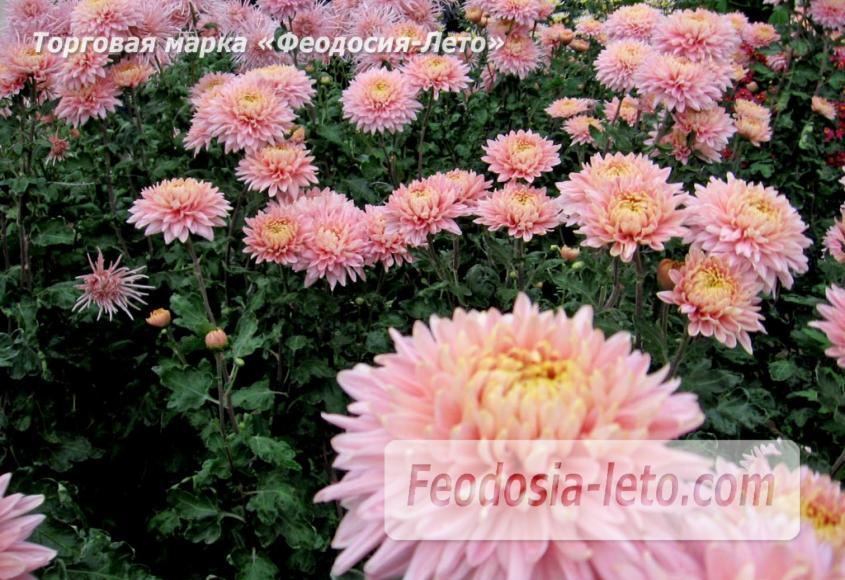 Никитский ботанический сад - фотография № 13