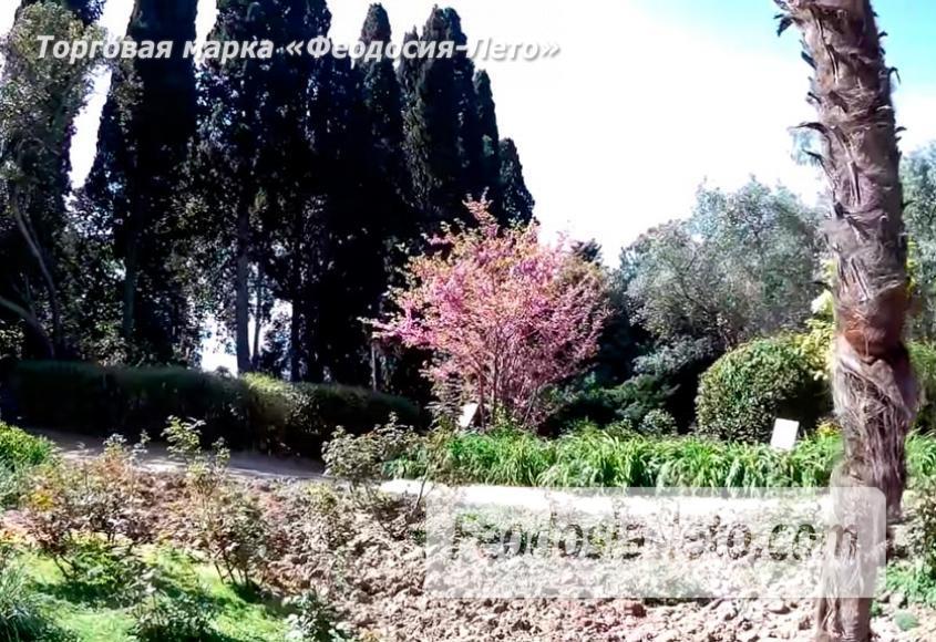 Никитский ботанический сад - фотография № 5