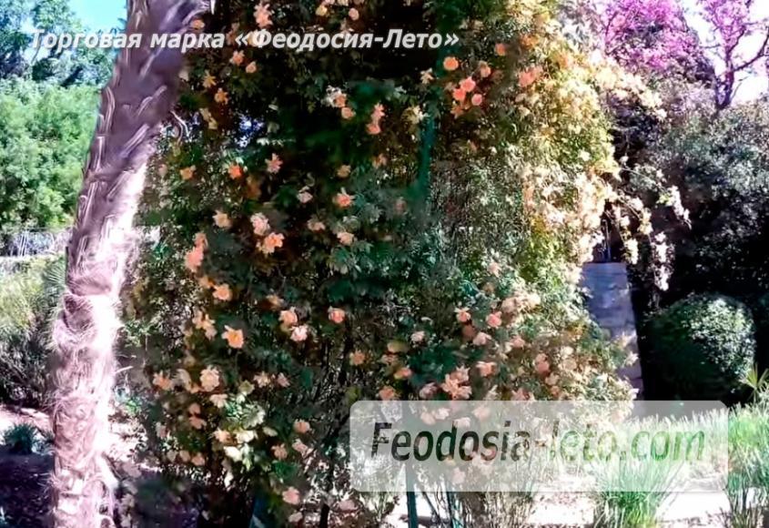 Никитский ботанический сад - фотография № 15