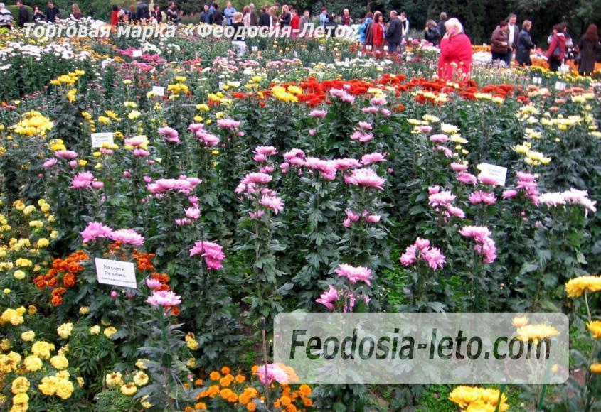 Никитский ботанический сад - фотография № 19