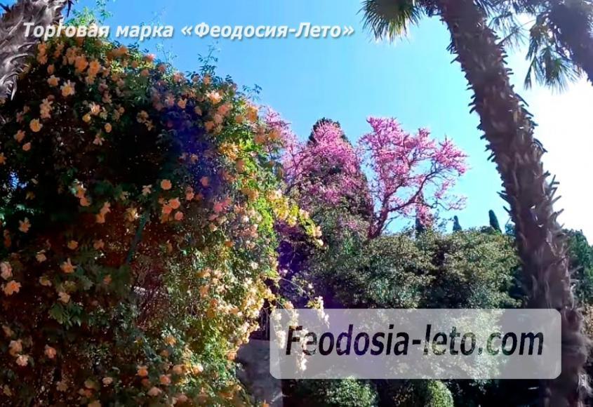 Никитский ботанический сад - фотография № 6