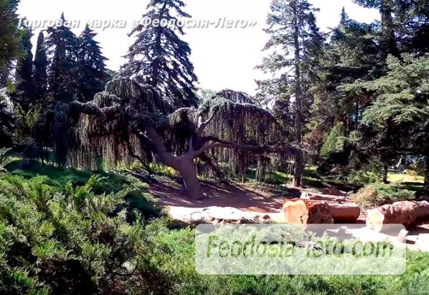 Никитский ботанический сад - фотография № 12