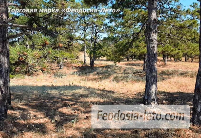 Экскурсии в Феодосии. Лес и Лысая гора - фотография № 4