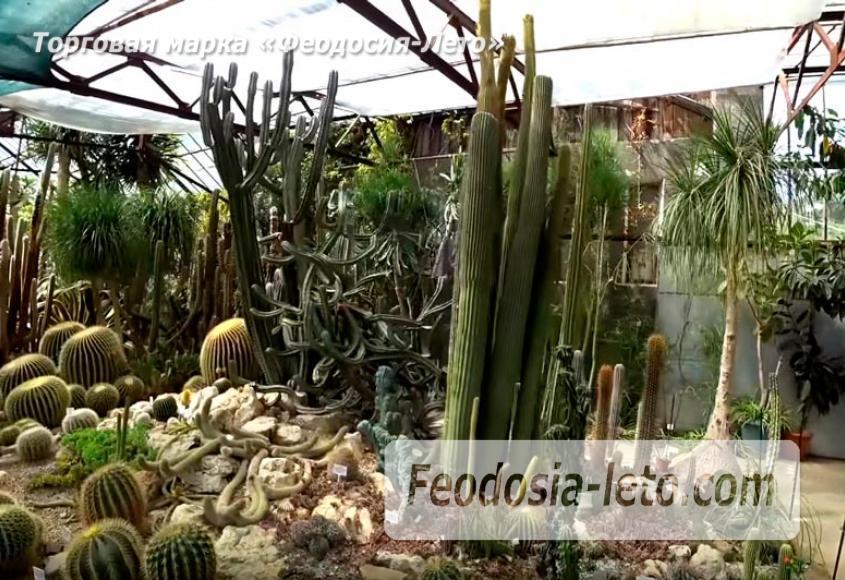 Никитский ботанический сад - фотография № 8