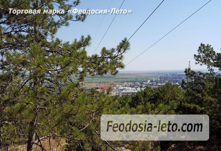 Экскурсии в Феодосии. Лес и Лысая гора - фотография № 7