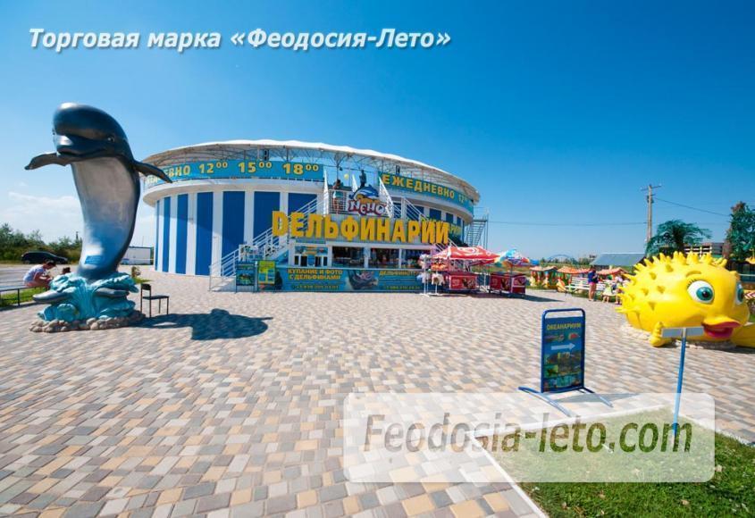 Крым Феодосия Дельфинарий Немо - фотография № 11
