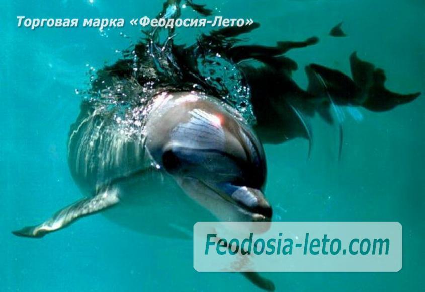 Крым Феодосия Дельфинарий Немо - фотография № 7