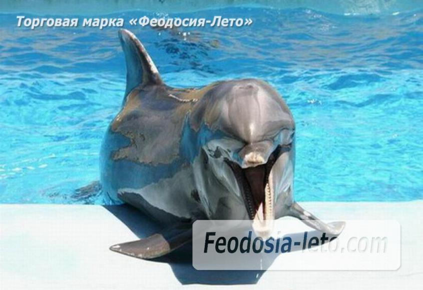 Крым Феодосия Дельфинарий Немо - фотография № 8